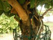 davidavd Tree end of wiring harness.jpg